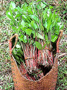 MPR: Khat drug leads to murder